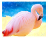 Hawaiian Flamingo Giclee Print by Kim Kolm