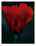 Red Poppy Photographic Print by Robert Sicotte