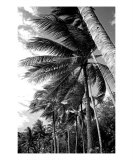 PO-07A Windy Palms Photographic Print by Luke Kneale