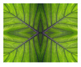 Abstract Leaf Print Photographic Print by James Davidson