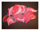 Pink Calla Lily Giclee Print by Brittney Peace