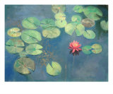 Lily Pads with Pink Flower Photographic Print by Sarah Parks