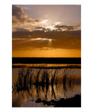 Everglades Sunset Photographic Print by David Thompson