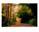 Nature Trail Photographic Print by Dale Mosher