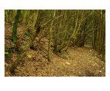 Chemin Dans La Foret Des Maures Photographic Print by Patrick Morand