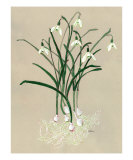 Snowdrops Giclee Print by Cindy Gilbane