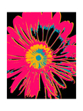 Daisy Big Pop Posters por Ricki Mountain