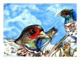 The Pheasants Giclee Print by Adena Macri
