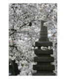 Cherry Blossom With Japanese Pagoda Photographic Print by William Luo