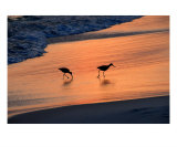 Beach Couple Photographic Print by David Thompson