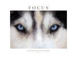 Fokus, konsentrasjon er hemmeligheten til styrke Fotografisk trykk av Brian Horisk