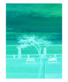 A Tree Grows In Aqua Photographic Print by Florene Welebny