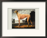 Greyhound on a Parkland Landscape Print by Christine Merrill