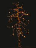 Christmas Lights Outline a Tall Tree in the Snow against the Dark Sky Photographic Print by Stephen St. John