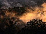 Fading Sunlight Tints the Rain Forest Mist Photographic Print by Tim Laman