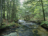 A Woodland View with a Rushing Brook Photographic Print by Heather Perry