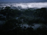Elevated View of the Borneo Rain Forest with Mist Photographic Print