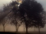 The Sun Peeks Through the Branches of a Tree Shrouded in Mist Photographic Print by Annie Griffiths Belt