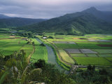 Taro Grows Along the Hanalei River Photographic Print by George F. Mobley