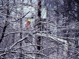 Power Line Repair Photographic Print by Peter Krogh