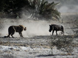An African Cheetah and a Warthog Kick up Clouds of Dust in a Tense Confrontation Photographic Print by Chris Johns