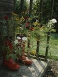 Flowers Bloom from an Unlikely Place-A Pair of Red Boots on a Porch Photographic Print by Jonathan Blair