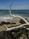 A Tree Branch Juts out over a Beach Along the West Coast of Maui Photographic Print by Marc Moritsch