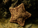 A Starfish Photographic Print by George Grall