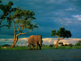 Elephant by a Water Hole on the African Plain Fotografisk tryk af Beverly Joubert