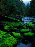 Algae Covers the Rocks Lining Salmon Creek Photographic Print by Raymond Gehman