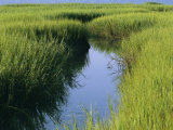 A Small Slough or Channel Running Through a Grassy Marsh Photographic Print by Heather Perry