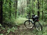 A Bike Rests on a Woodland Trail Lámina fotográfica por Petteway, Al