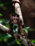 Close View of a Baby Macaque Photographic Print by Mattias Klum