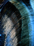 Close View of a Sheet of Water Pouring over a Dam Fotoprint van Raymond Gehman