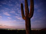 Saguaro Cactus Photographic Print by Phil Schermeister