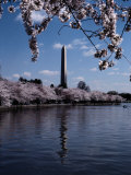 The Washington Monument is Reflected in the Tidal Basin Photographic Print by Stephen St. John