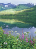 Summit Lake, Sunbeam on Forest, Firewee, Chugach National Forest, Alaska Fotografisk tryk af Rich Reid