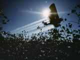 A Crop Duster Spraying a Cotton Field Photographic Print by Kenneth Garrett