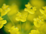 A Close View of Fresh Yellow Wildflowers Photographic Print by Heather Perry