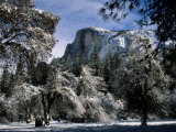 Snow-Covered Trees Frame Half Dome Mountain in California Photographic Print by Tim Laman