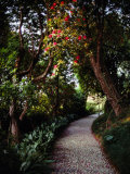 Cobblestone Path Winding Among Flowering Trees Photographic Print by Sam Abell