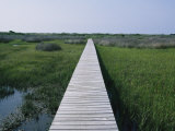 A Boardwalk Allows Visitors to Walk out into the Marsh Photographic Print by Stephen Alvarez