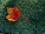 A Maple Leaf Lies on Emerald Moss in Autumn Photographic Print by George F. Mobley