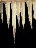 Illuminated Icicles Hang in Front of a Dark Background Photographic Print by Todd Gipstein