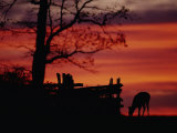 The Sunset Silhouettes a White-Tailed Deer Near a Fence Photographic Print by Raymond Gehman