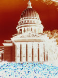 Bright Red Colors against Blue and Purple Tulips Decorating the Capitol Building in Madison Photographic Print by Stacy Gold