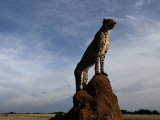 An African Cheetah Guards His Territory from the Top of a Large Termite Mound Photographic Print by Chris Johns