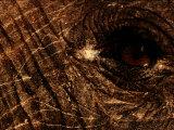 Eye of an African Elephant Fotografisk tryk af Chris Johns