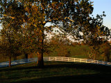 Sycamore Tree and Wood Fence at the Shaker Village at Pleasant Hill Photographic Print by Raymond Gehman