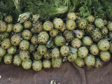 Artichokes and Greens Arranged on Burlap Photographic Print by Bill Curtsinger